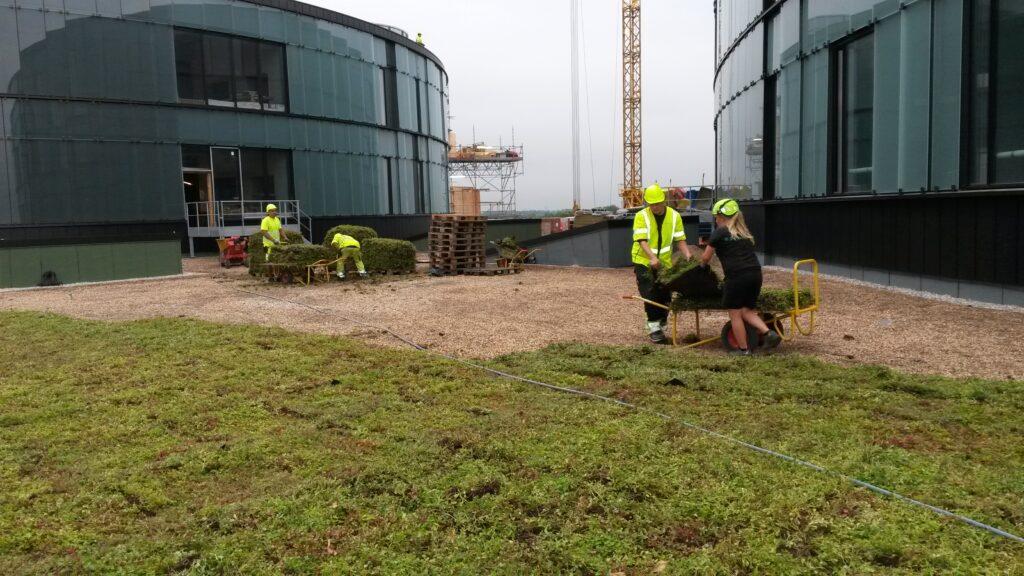 Grønne Taghave forberedelse